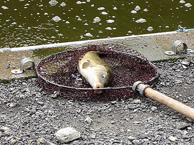 fishing_pond008.jpg